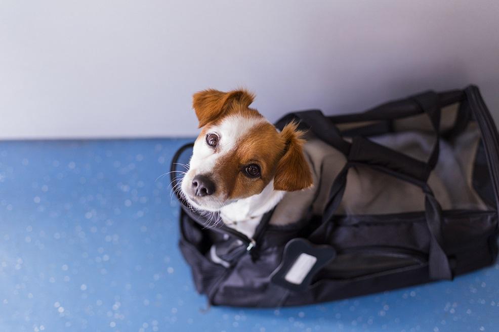 Viajar con Mascotas en Cabina